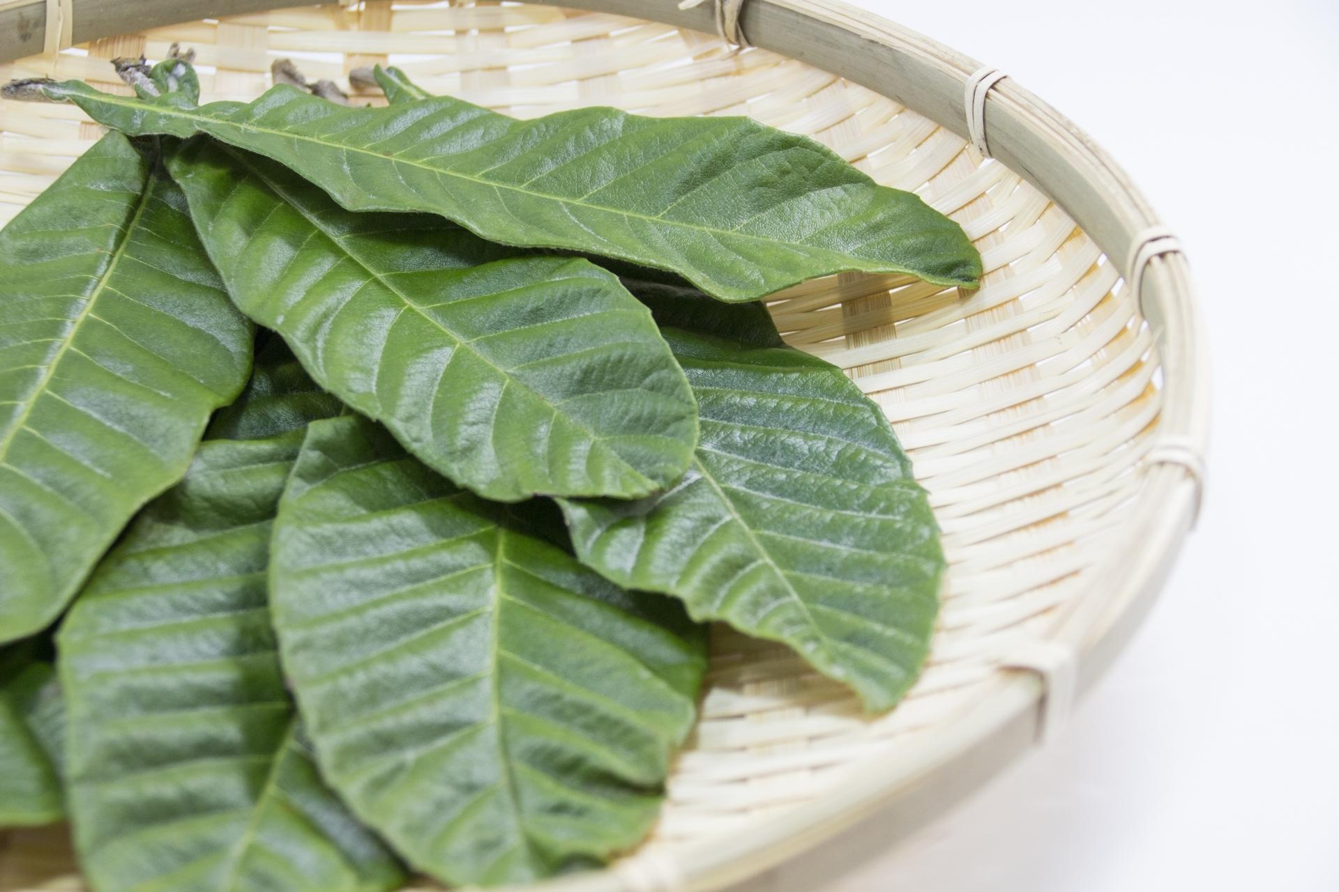 びわの葉温灸 鍼灸